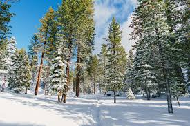 From the early indians to authors such as mark twain, folks have tried to capture the beauty and mystique of the lake with nicknames like big blue and grasshopper soup. What To Do During A Lake Tahoe Winter Plum Guide