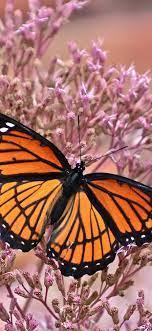 Butterfly, wings, pink little flowers ...