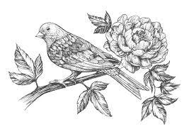 大人の塗り絵鳥と花無料印刷 もくもくん知育プリントキッズ