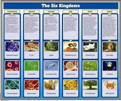 Six Kingdoms Characteristics Chart Montessori Materials The Six Kingdoms Chart With Cards