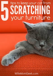 How to Stop a Cat from Scratching Your Furniture