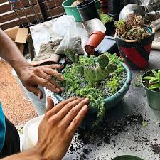 Creating Your Own Succulent Planter - The Great Outdoors Nursery