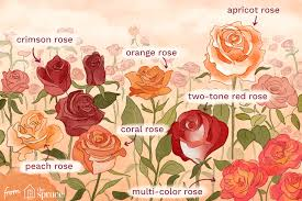 Flower Species Chart 15 Varieties Of Roses To Consider For Your Garden