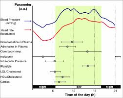 Circadian Acrophase Chart For Various Parameters In Plasma