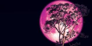 Image result for strawberry full moon