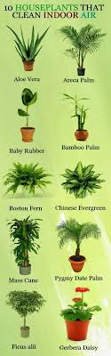 Ten Houseplants That Clean Indoor Air. Looking at all the lists like this,  I'm thinking that probably ALL houseplants