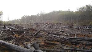 ways to stop deforestation mother nature network deforestation