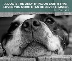Quotes About Dogs Extraordinary 48 Of The Best Dog Inspired Quotes Puppy Leaks