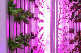urban vertical and indoor agriculture