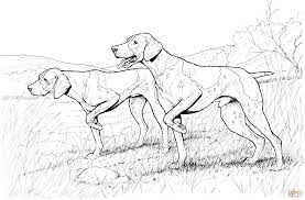 Small Picture Pointer Dogs coloring page Free Printable Coloring Pages