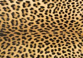 new 55 most bang up foflor animal print area rugs unique doormats in leopard rug
