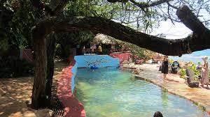 backyard salt water pool. Brilliant Water Salt Water Pool Throughout Backyard Salt Water Pool A