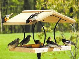 От урока ще разбереш как може да си направиш хранилка за птички и защо хората оставят семенца в. Mnogo Hubavi Hranilki Drveni Hranilki Za Ptici Pravim Go Lesno I Brzo Izpito Mlyako Predadoh Kontejnera Strahotna Hranilka Za Ptici Ot Kartonena Kutiya