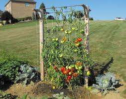 you will need a skyser garden trellis this is designed to offer support for climbing branches and vines while enhancing your decor settings