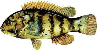 Deep Current Recreational Marine Fisheries Regulations