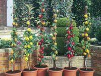 сад: лучшие изображения (302) в 2020 г. | Садовые идеи ...