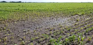 Image result for pics of flooded farm fields