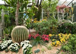 Small Picture Download Cactus Garden Ideas Solidaria Garden
