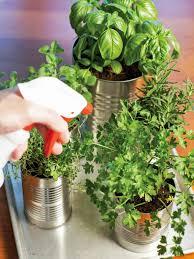 plants for kitchen garden fresh grow your own kitchen countertop herb garden