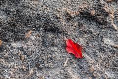 Resultado de imagen para cenizas y hojas