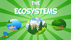 Image result for ecosystem