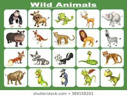 Pet Animal Picture Chart Animal Chart Images Stock Photos Vectors Shutterstock