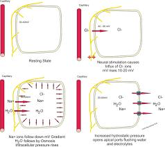 Electrolyte Balance Boundless Anatomy And Physiology