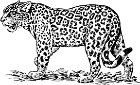 Select print at the top of the page, and the advertising and navigation at the top of the page will be ignored, or. Jaguar Coloring Pages Jaguar Printable Coloring4free Coloring4free Com