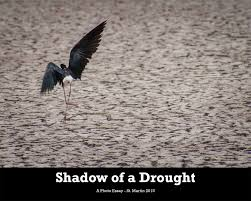 photo essay shadow of a drought birdscaribbean the photo essay shadow of a drought is available as a in both english