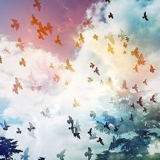 colorful birds flying tumblr. Colorful Birds Flying Tumblr In