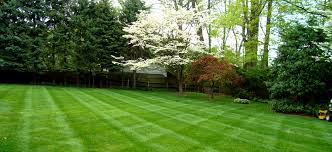 Lawn Care Near Me Services Checklist And Free Quotes In 2019