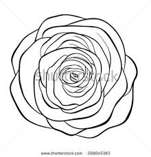 Small Picture Rose Flower Isolated Outline Hand Drawn Stock Vector 556928335