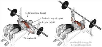 Decline Barbell Bench Press Guide And Video  Weight Training GuideDecline Barbell Bench