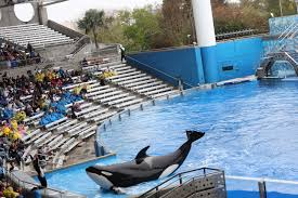 seaworld orlando announces the mysterious of 30 year old orca kayla southern living