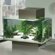 Looking for a responsible #Aquarium firm in London who takes care of  everything from installation