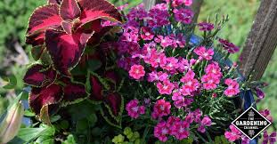 top container flowers best 8 choices