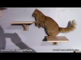 diy custom cat shelf stairs