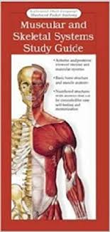 Muscular And Skeletal Systems Study Guide Anatomy And