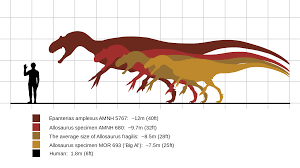 Dinosaur Sizes Comparison Chart Allosaurus Size Comparison Real Dinosaur Prehistoric