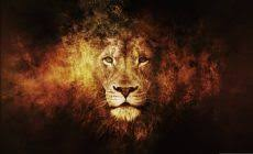 lion wallpaper high resolution. Lion Wallpaper High Definition For Desktop 2880 1800 Px 152 MB Abstract Angry Iphone On Resolution