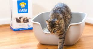 8 <b>Best Cat</b> Litter 2019 | The Strategist | New York Magazine