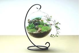 Decorative Hanging Glass Balls Fascinating Decorative Hanging Glass Balls Glass Ball Terrarium Hanging Glass