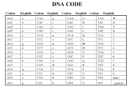 Protein Synthesis Worksheet Key Unique Dna Vs Rna Protein also Dna Replication Coloring Worksheet Answer Key   Color of Love additionally Transcription and Translation Worksheet Answers   homework together with Transcription and Translation Worksheet   Homeschooldressage moreover DNA TRANSCRIPTION   TRANSLATION WORKSHEET    MAFIADOC also Dna replication worksheet answers    Dna Replication Coloring besides Transcription  Translation and Replication together with Assignment on DNA  RNA  Transcription and Translation likewise  as well Transcription and Translation Worksheet also Transcription vs Translation   Difference and  parison   Diffen. on transcription and translation worksheet answers