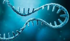 mRNA: Kleines Molekül, große Hoffnung - Südtiroler Wirtschaftszeitung