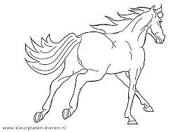 Paard In Galop Kleurplaten Dierenkleurplaten Dieren Kleurplaten