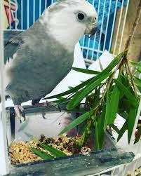 Pearlie Bird enjoying a hard... - Early Birds Pre-Kindy