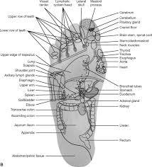 Cranial Reflexology Chart Reflexology An Overview Sciencedirect Topics