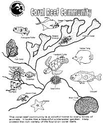 Ocean Plants Coloring Pages Adults Coral