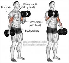 Biceps Exercise Chart Best Biceps Exercise For Big Arms Bodybuildingequipments