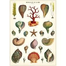 Seashell Chart French Seashell Ocean Life Chart Vintage Style Poster